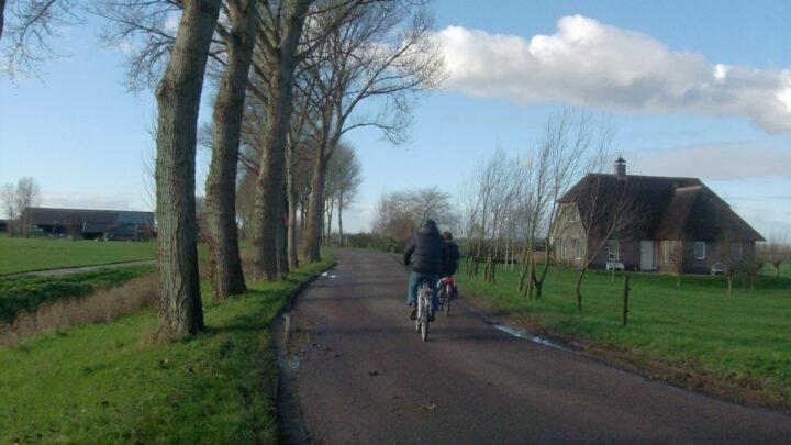 PVV Nissewaard roept commissie en raad op zich te verdiepen in het besluit om 87 zestig jaar oude populieren te kappen (deel 1)