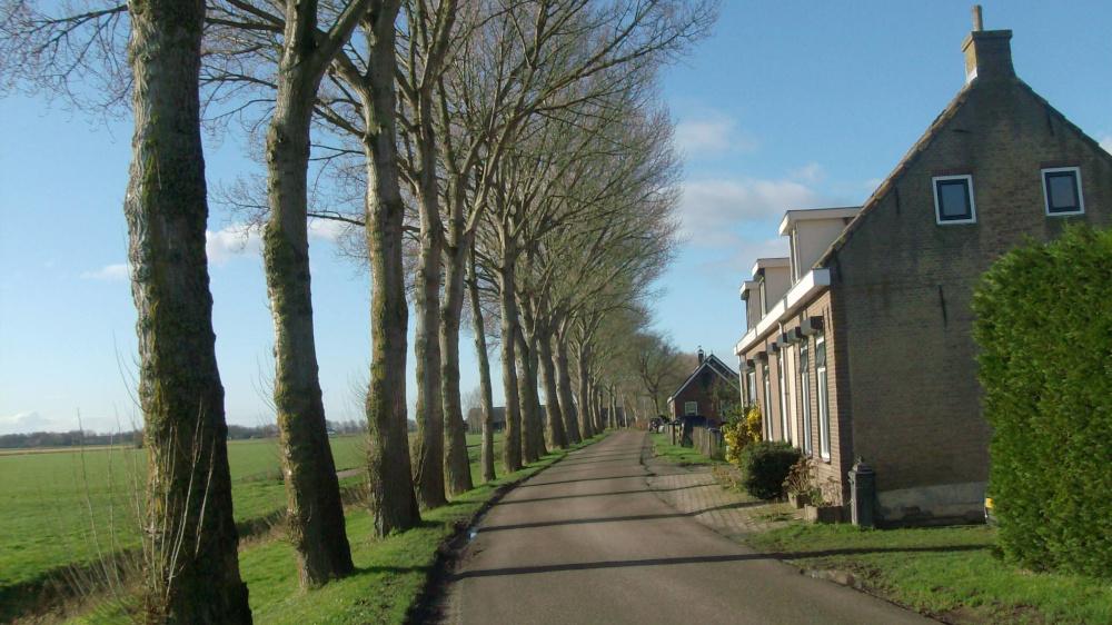 Bomenkap Drieëndijk Heenvliet (deel 2)
